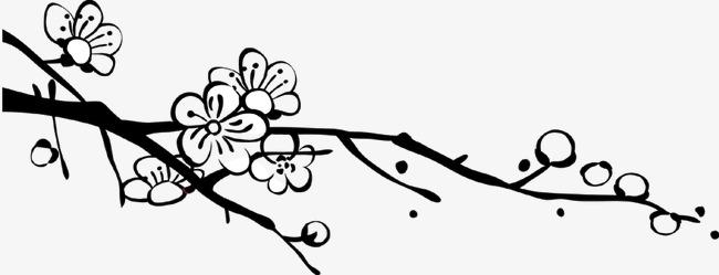素描梅花花苞