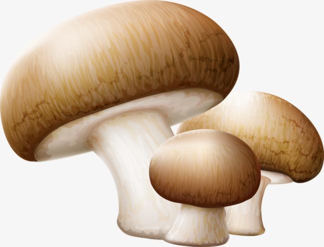钩针蘑菇盒子图解