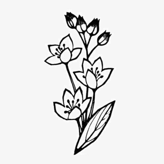黑白素描花朵