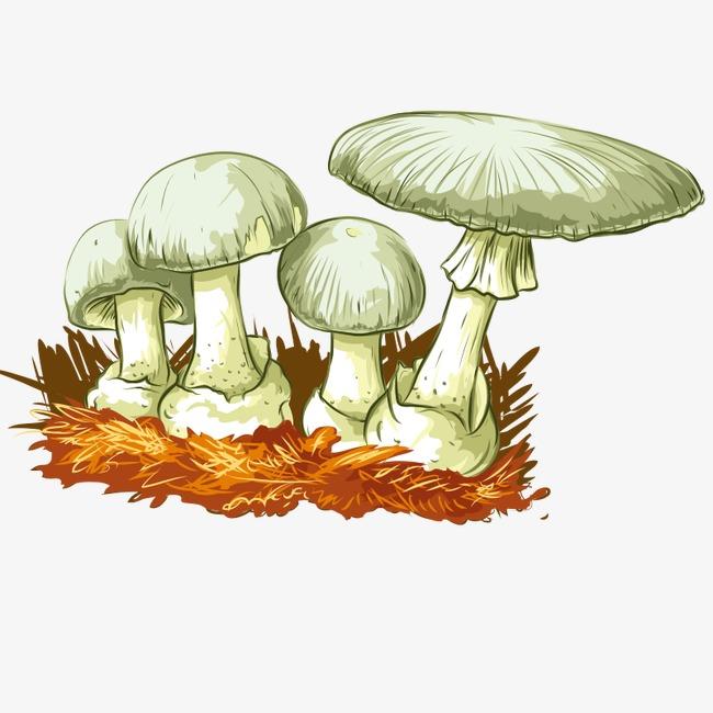 手绘蘑菇 食物 草菇 植物 食品