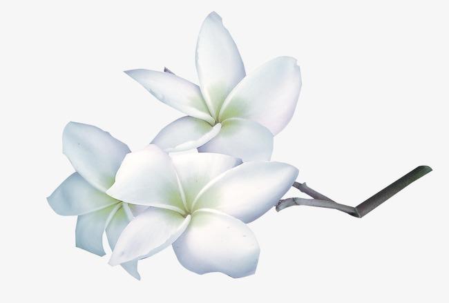 手绘 白色花