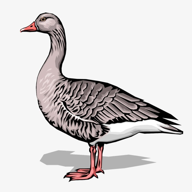 鸭子 动物             此素材是90设计网官方设计出品,均做版权备案
