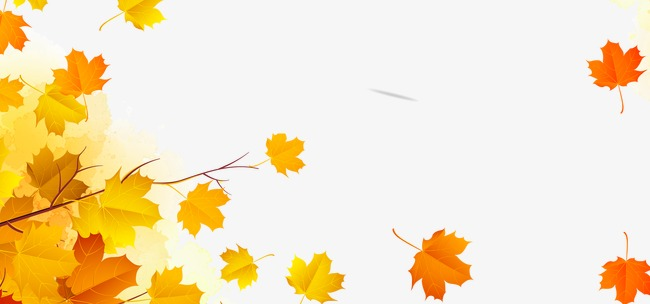 秋天  飘落  黄色  枫叶  树叶   秋天 飘落