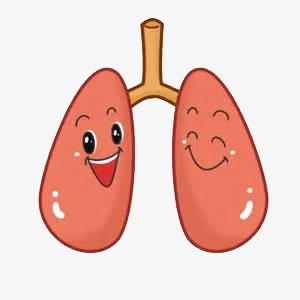 肺����y�9����_肺卡通图