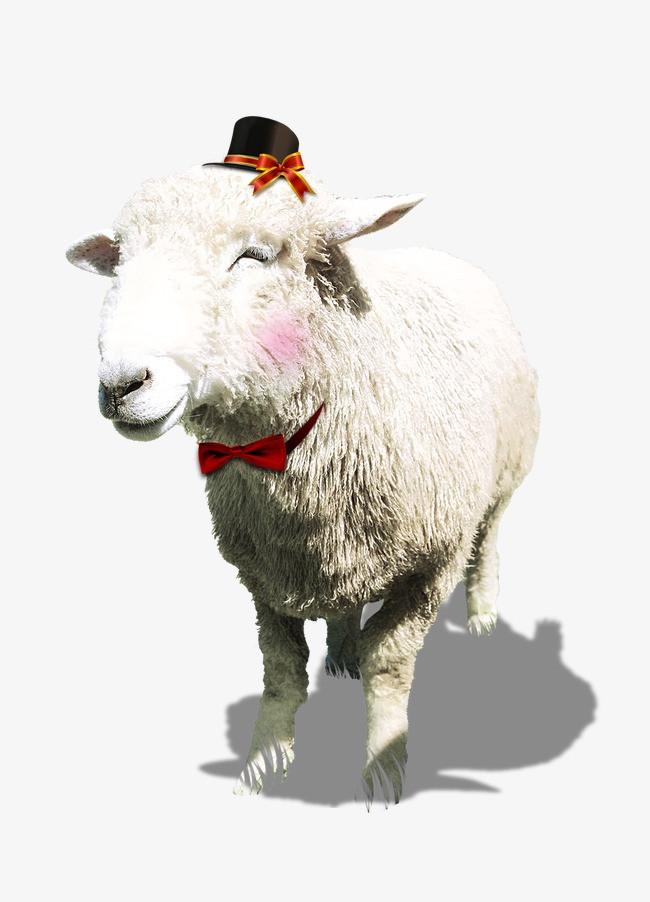 可爱的小绵羊