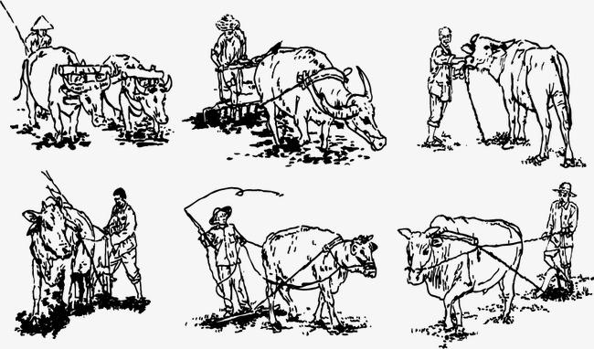 农夫与耕牛囹?a_农民与耕牛