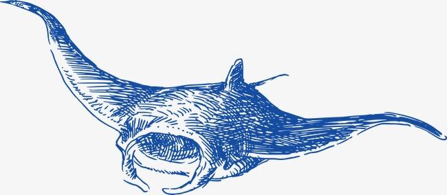 手绘 鲸鱼