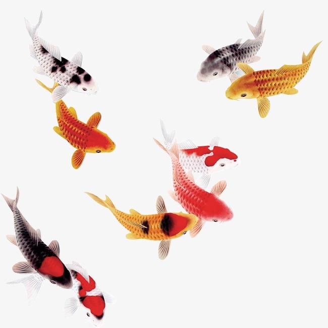 水彩鲤鱼的画法步骤图