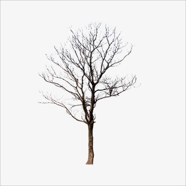 干枯树枝素材图片免费下载_高清漂浮素材png_千库网