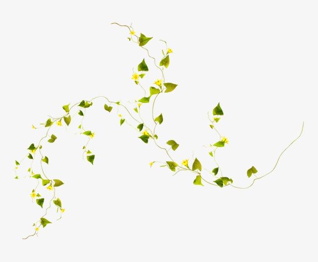 白色小花 底纹 装饰素材图片免费下载_高清png_千库网