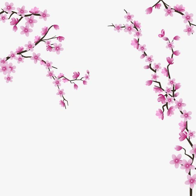 樱花钢琴谱钢教