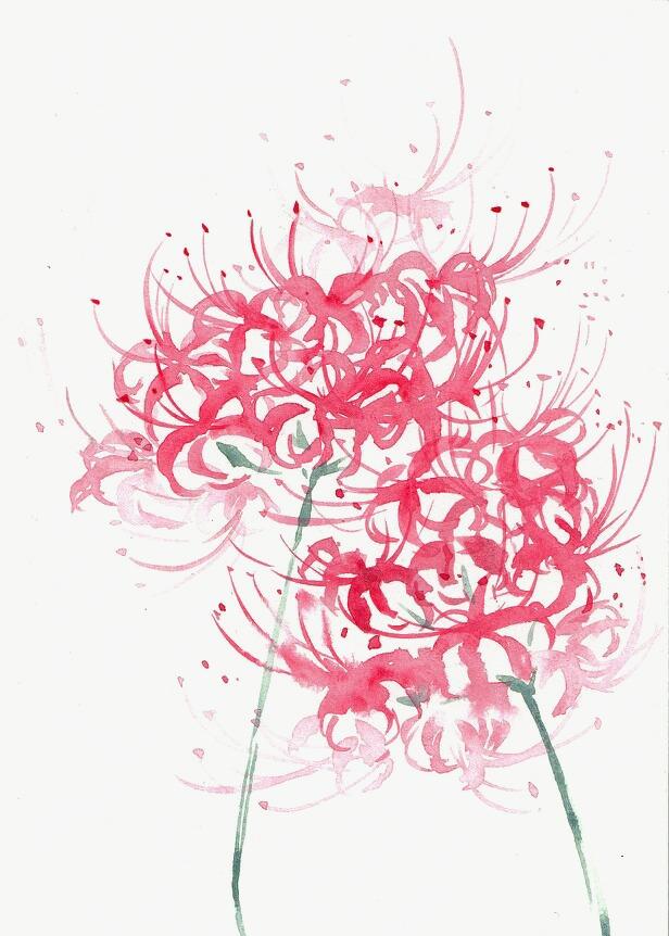 彼岸花 红色 鲜花 手绘花朵             此素材是90设计网官方设计