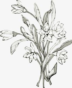 一束花朵简笔画