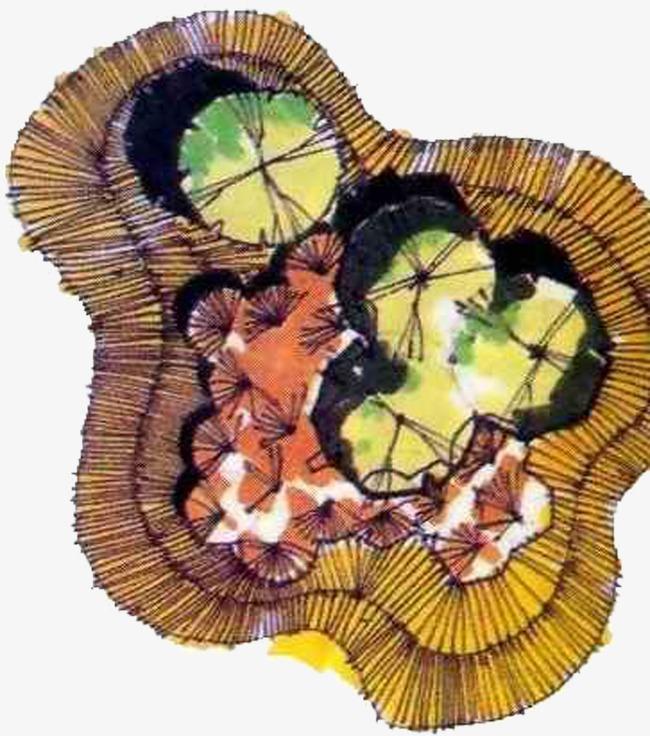 手绘植物平面图