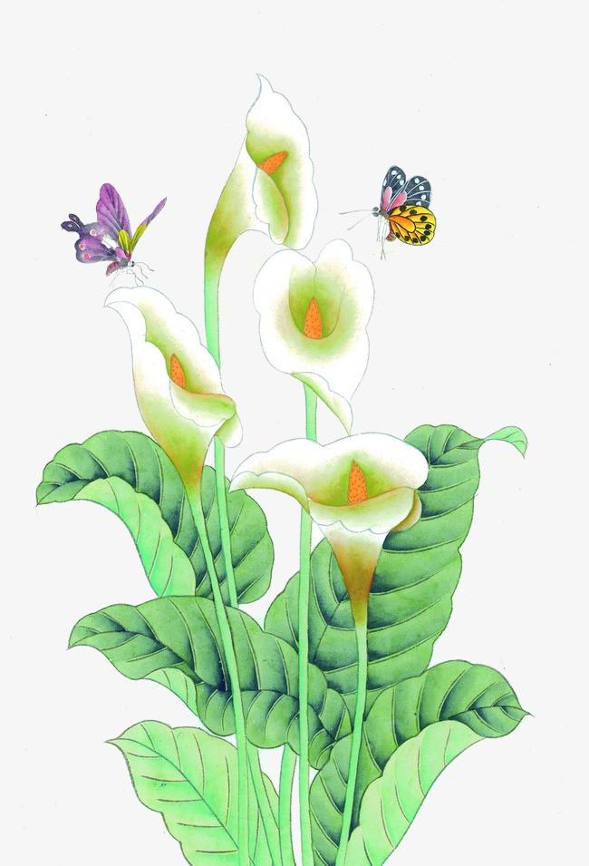 手绘百合花