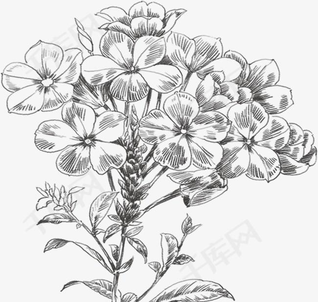手绘小花卉手绘小花卉线描花卉设计装饰图案线描稿-手绘小花卉素材图片