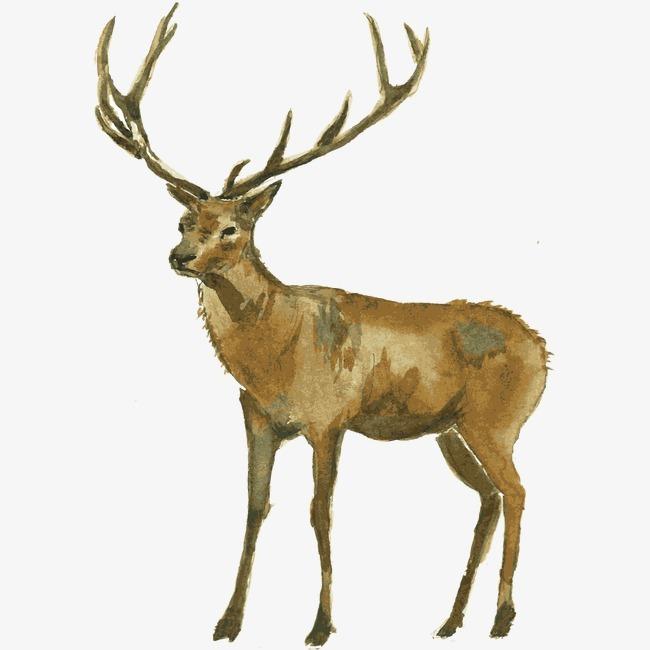 马克笔星空手绘麋鹿
