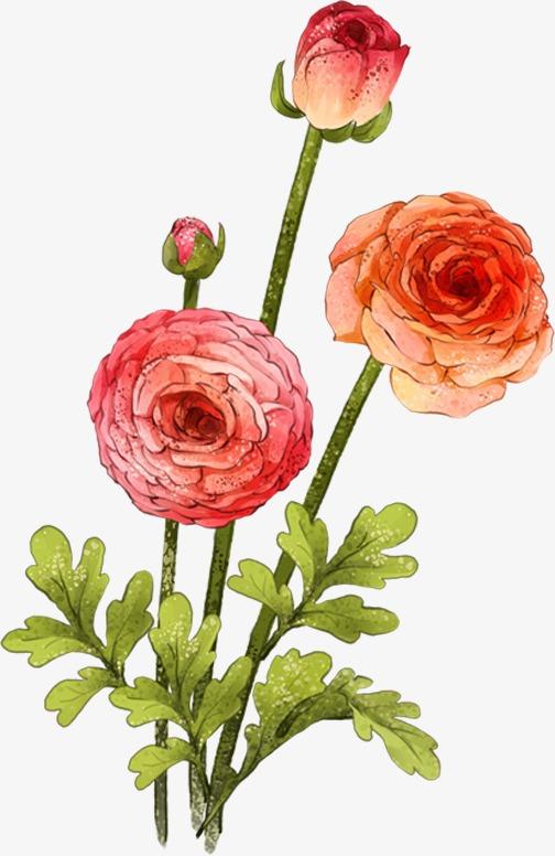 一束手绘水粉画玫瑰花一束玫瑰花手绘玫瑰花水粉玫瑰粉色玫瑰手绘花