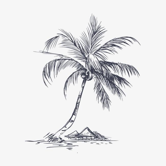 椰子树 手绘