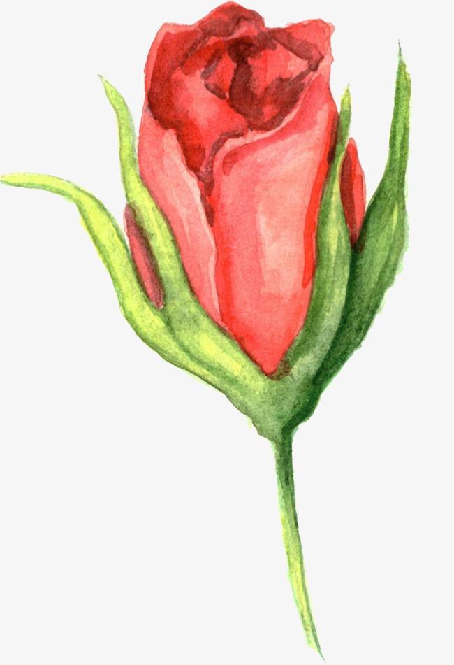 水彩画花卉图片