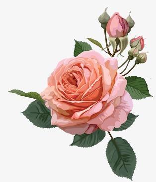 唯美手绘花卉