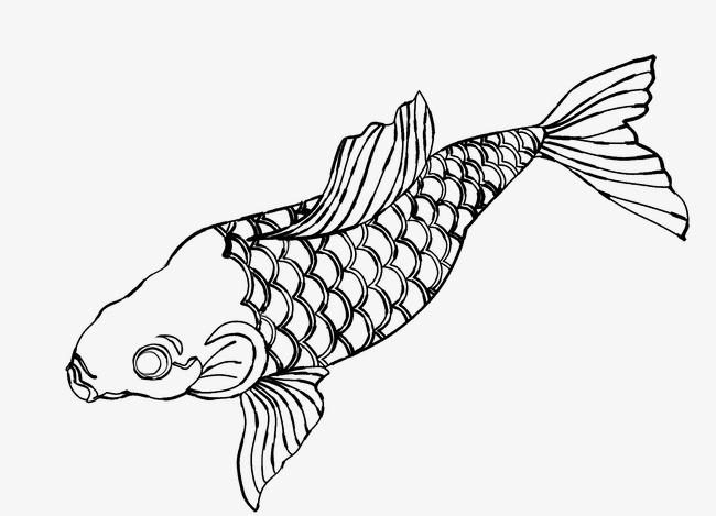 手绘卡通鲤鱼