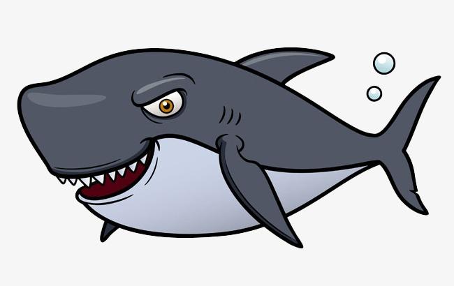 鲨鱼内脏身体yabo亚博体育