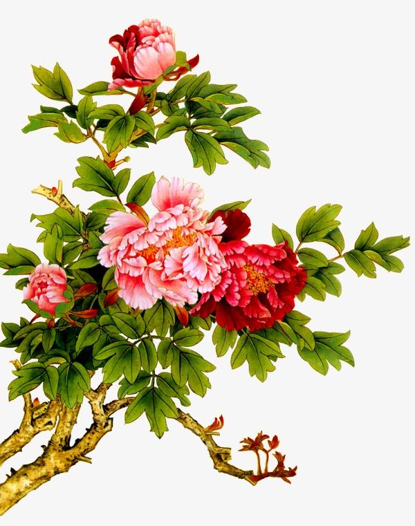 手绘牡丹花素材手绘牡丹花牡丹工笔画牡丹-手绘牡丹花素材图片免费