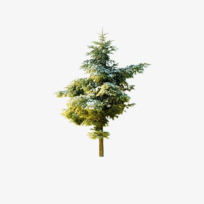 一棵树的囹�a_一棵树的图片