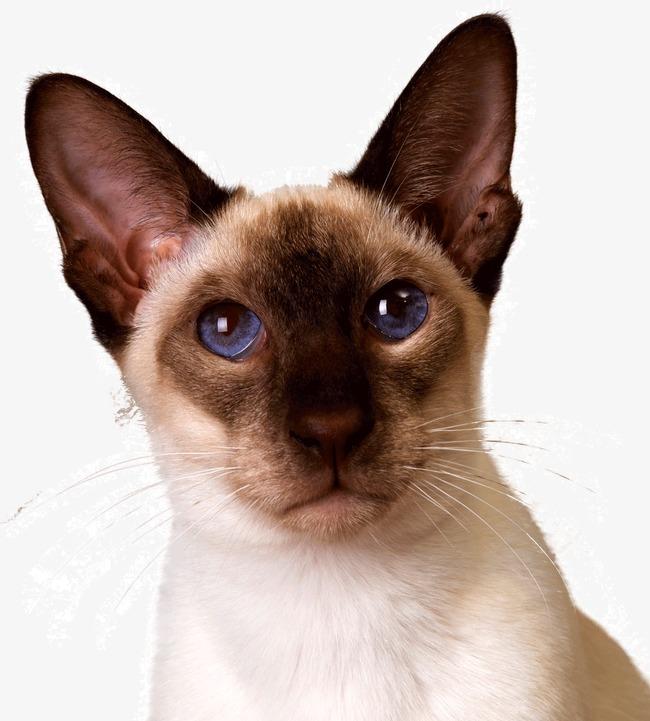 可爱 紫眼睛 小猫咪             此素材是90设计网官方设计出品,均做