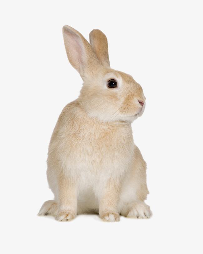 壁纸 动物 兔子 650_812 竖版 竖屏 手机