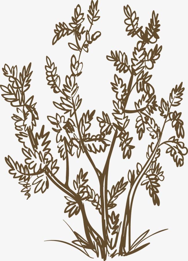 手绘植物树