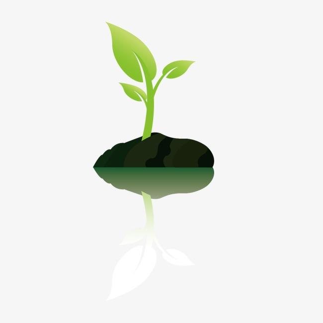 小树苗图片