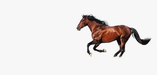 黄马 跑马图片