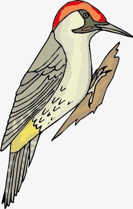 手绘卡通鸟类