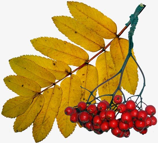 幼儿园中班秋天的树叶