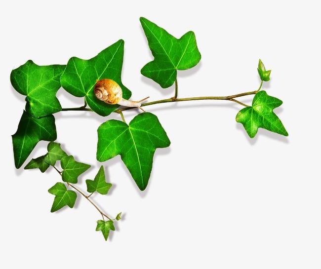 设计元素 其他 效果素材 > 绿色树叶  [版权图片] 找相似下一张 >