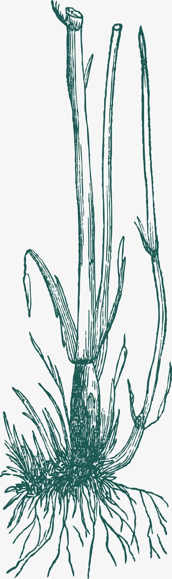 手绘草线稿