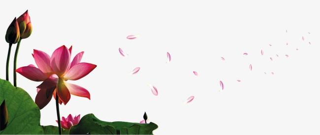 荷叶荷花花瓣