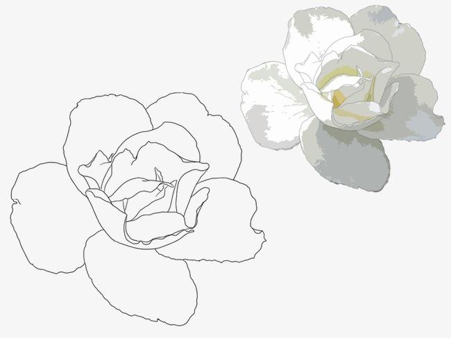 手绘玉兰花