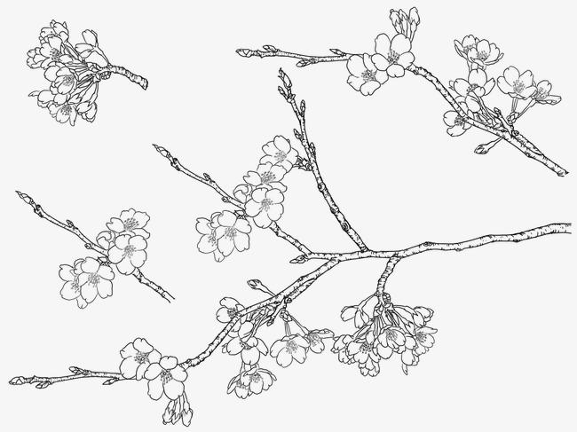 手绘樱花素材图片免费下载 高清漂浮素材png 千库网 图片编号2814527