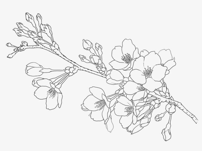 手绘樱花素材图片免费下载 高清漂浮素材png 千库网 图片编号2814528