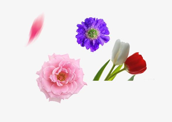 书本花卉花朵植物文艺清新文学