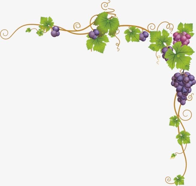 葡萄 枝蔓 树藤 边框 外框 花边 绿色 叶子 葡萄藤蔓             此