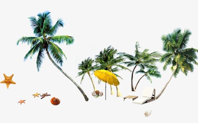 举报 沙滩素材模板下载 沙滩素材图片下载夏天素材椰子树植物海滩素材