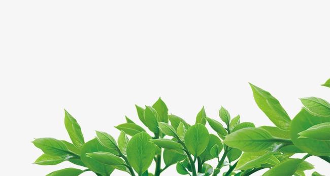 树叶青蜒手工制作图片