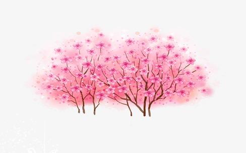 樱花树(图片编号:15396633)图片