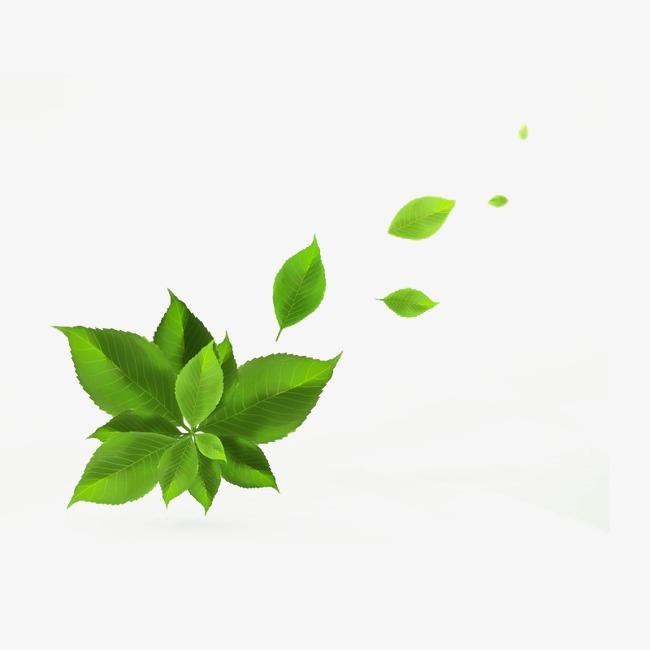 绿色手绘树叶