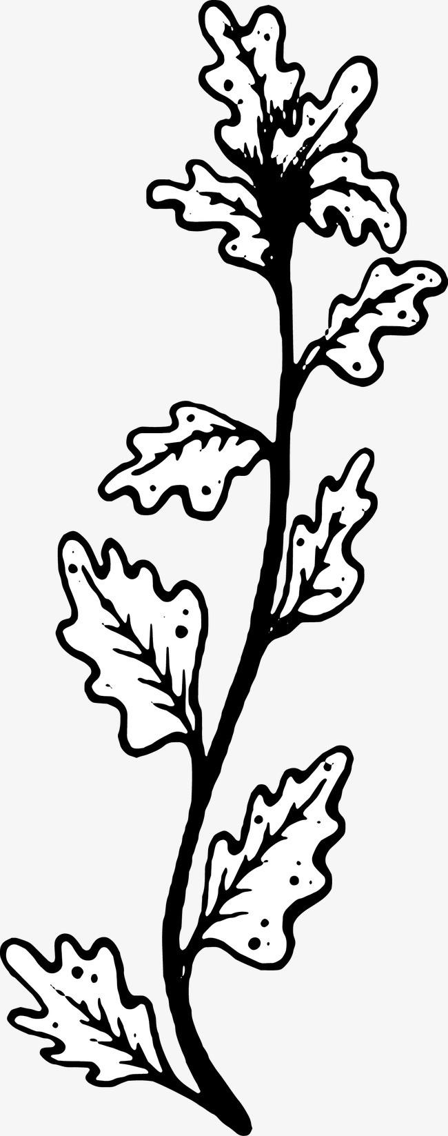手绘 叶子 黑白手绘 叶子 黑白免扣素材 手机端:手绘叶子