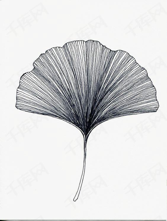 手绘植物叶子线条简约图片